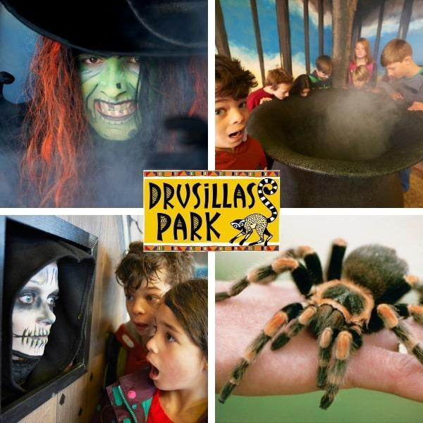 Win a Family Ticket to Drusillas Park